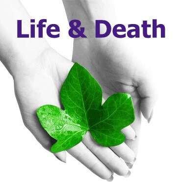 C2046 Certificate in Life and Death Education for Caring Professionals (Class 5)